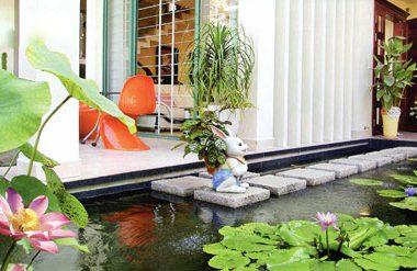 Hồ sen bên nhà
